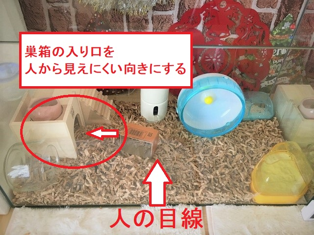 ハムスターが巣箱に引きこもる!出てこない理由と対処法。
